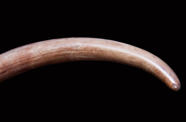 猛犸象牙 原牙 猛犸象原牙