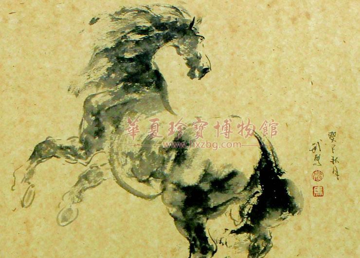 系统学习马匹解剖与运动规律